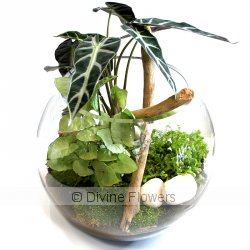 Terrarium 25cm  Priced from $ 128  Click for more details