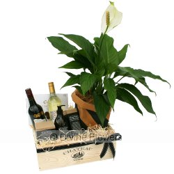 House Warming Hamper with Wine  Priced from $ 256  Click for more details