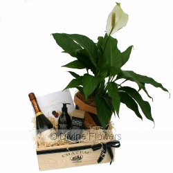 House Warming Hamper with Grant Burge  Priced from $ 189  Click for more details